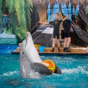 Дельфинарии, океанариумы Таврического