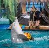 Дельфинарии, океанариумы в Таврическом